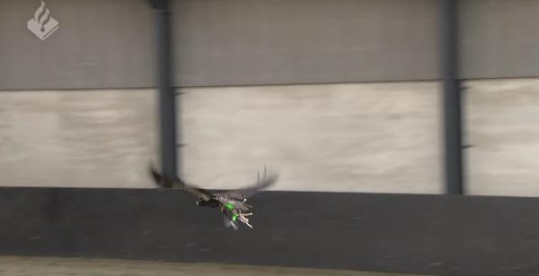 Les drones & les rapaces.