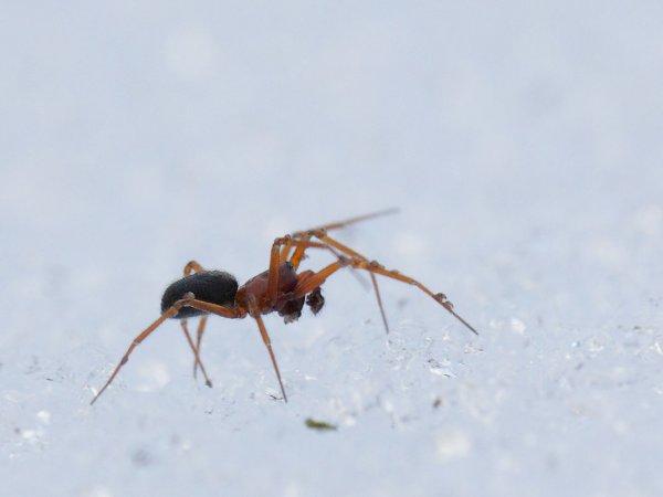 Les araignées  1