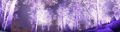 La Forêt Blanche 3299021772_1_17_hIh6DpS6
