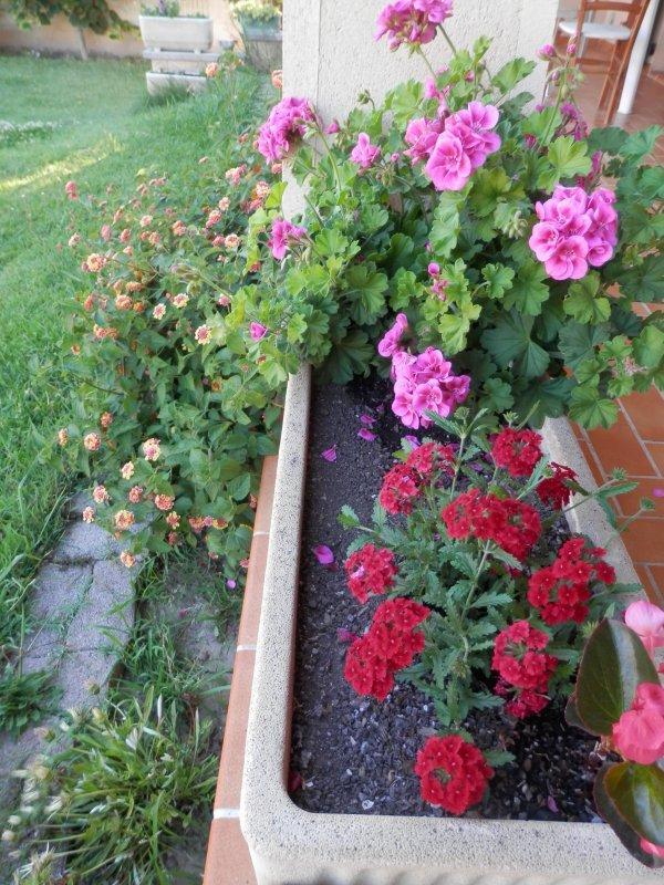 Un peu de couleur du jardin !
