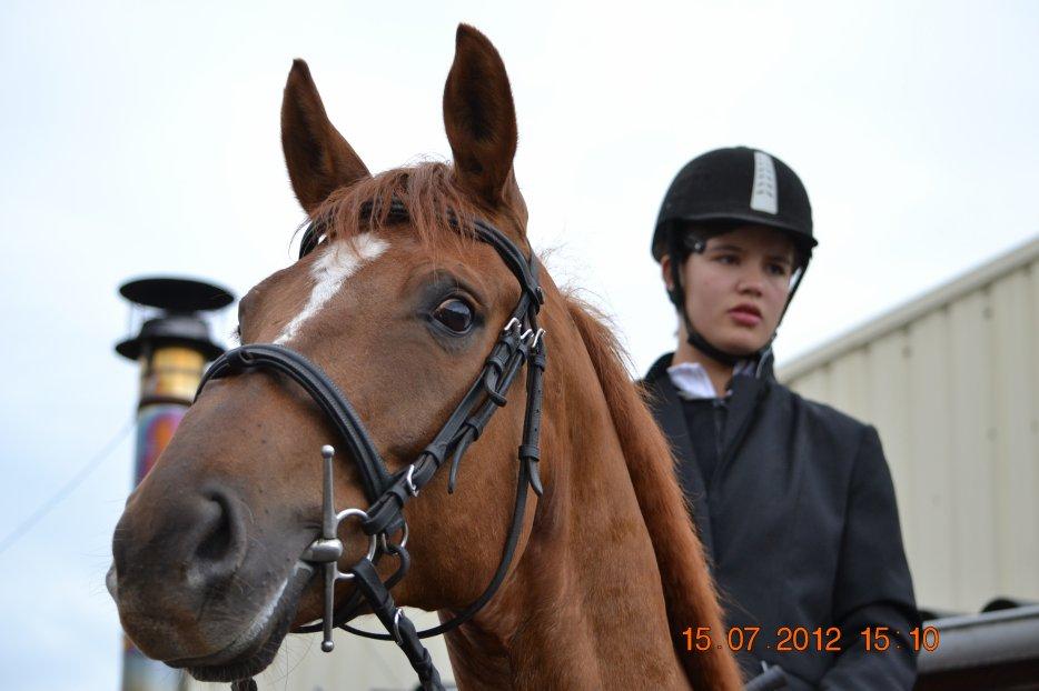 Annuaires de blog de chevaux ♥