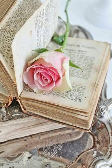 L'amour, c'est rire, c'est sourire, c'est grandir, c'est embellir, c'est mûrir et vieillir mais surtout c'est vivre.