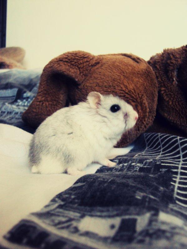« Tous les animaux sont égaux, mais il y a des animaux plus égaux que d'autres. »