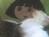 Mon chat... perdu à jamais malheureusement pour moi...