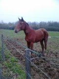 Photo de chevaux-de-courses21