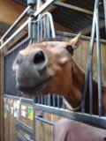 Photo de Montage-chevaux3