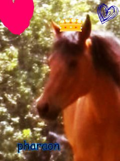 pharaon mon petit roi