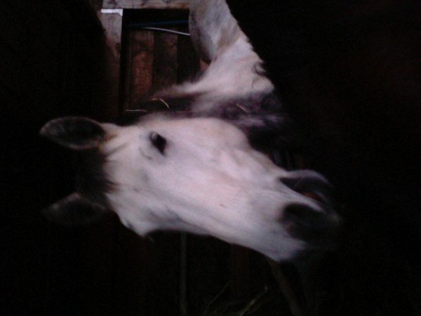 Voila poney