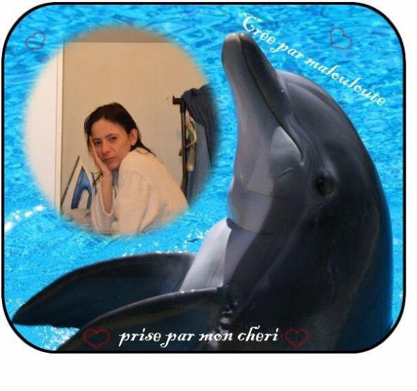 (5eme)  dauphin je l adore