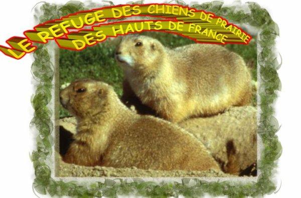 refuge des Chiens de Prairie