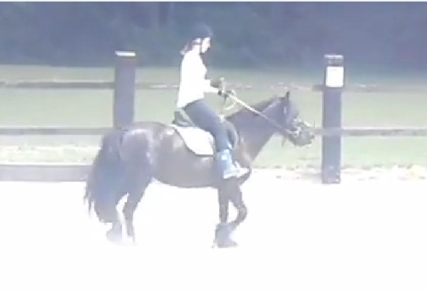 ~Horse-Dream42~ Ma passion , les chevaux.