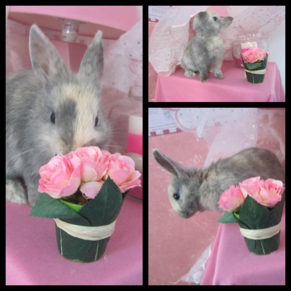 Le rose, c'est pas que je n'aime pas..