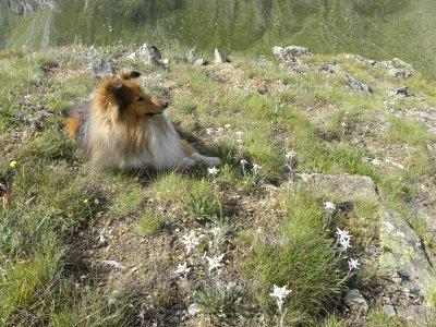 Bugsy au milieu des Edelweiss