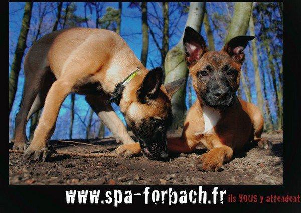 Spa forbach