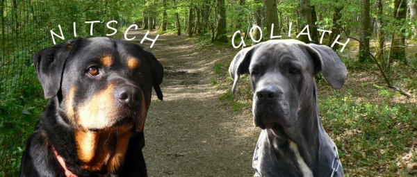 Nos grands chiens