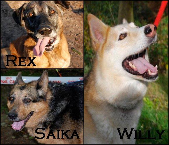Nos vieux chiens