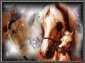 Photo de the-horse-race