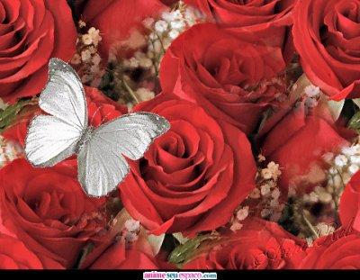 des belles fleurs pour  vous