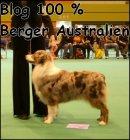 Photo de Le-Berger-Australien