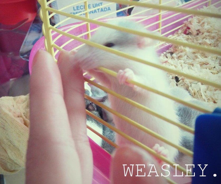 Weas' & Will' «3