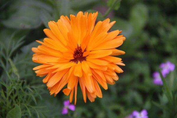 Bien sur il y a aussi de magnifiques fleurs