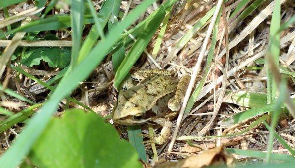 Petite promenade dominicale avec quelques belles rencontres le nez dans l'herbe .