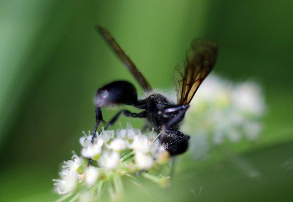J'ai aussi rencontré quelques insectes