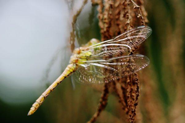 Insectes du parc.