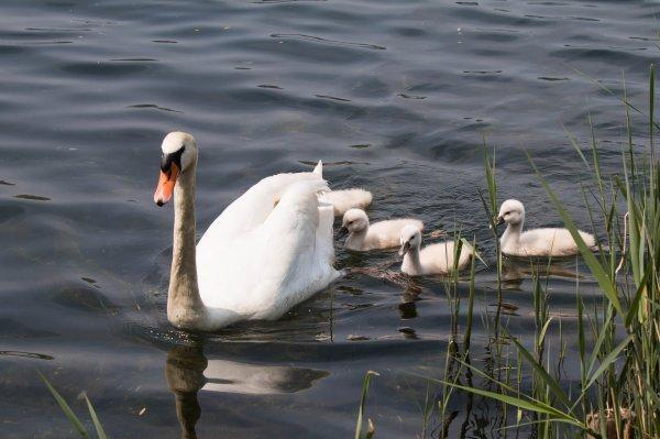 Une petite balade au Lac de Créteil voir les naissances de l'année