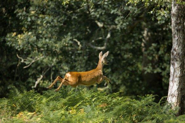 Petite promenade en forêt avec ses premières chaleurs