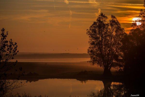 Lac du Der  les grues n'étaient pas réellement au rendez vous, moins nombreuses que l'an dernier !