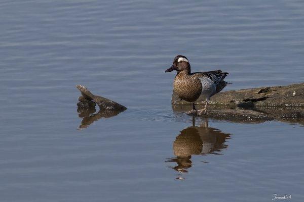 Ballade en Gironde (Le Teich)