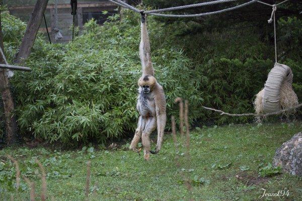 Une journée au Parc animalier de la Flèche 72