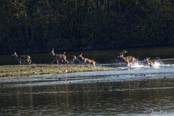 Une journée en Forêt de Fontainebleau