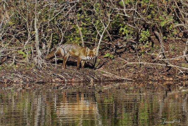 Une journée en Forêt de Fontainebleau suite .