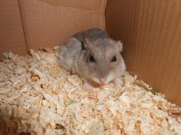 Voici mon hamster