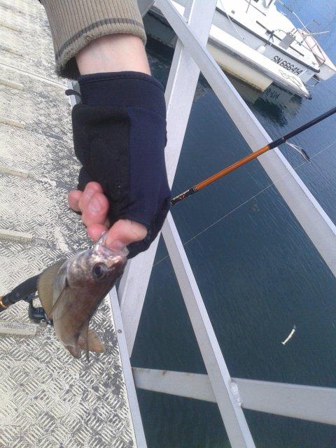 sortie avec rockfish carna 50 uand il n'y a pas cours