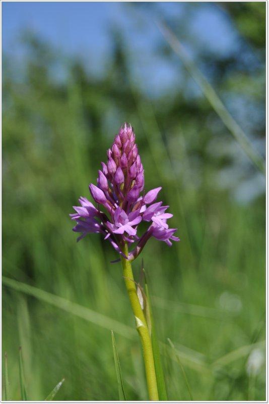 cette année les orchidées sont en avance... en voici quelques unes !