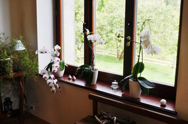 les orchidées repoussent, je les chouchoute