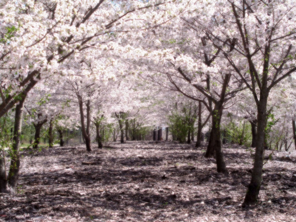 Soirée Spécial Ce Que j'aime au Japon #n3