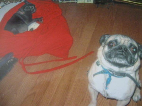 maggie et puppy