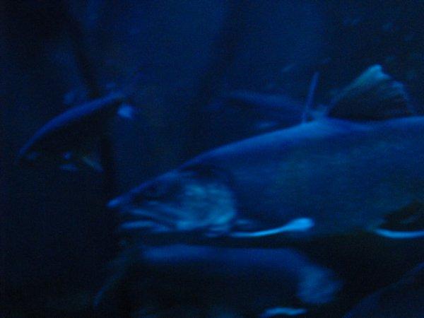 aquarium de québec