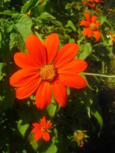 club photo jardin botanique
