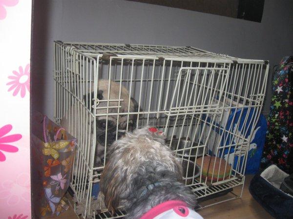 puppy et maggie
