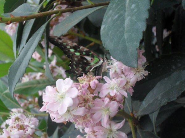 papillon en liberté au jardin botanique