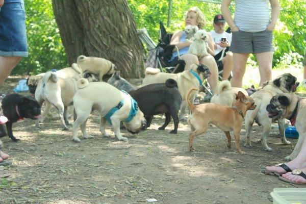 parc canin de longueil au pug rencontre
