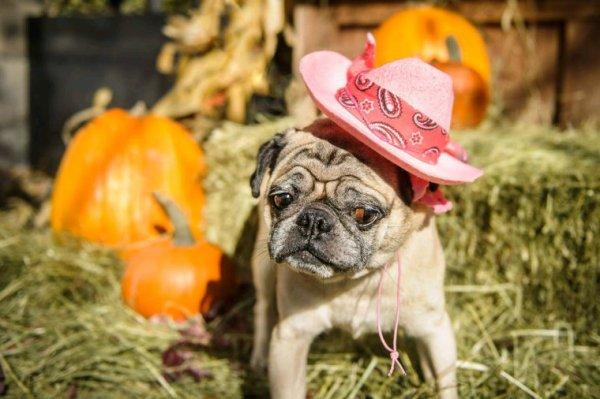 Séance photo d'automne de puppy