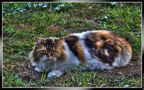 race : chat angora / 9 septembre 2011