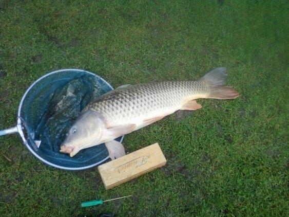 et pour finir la petite matinée du 15/02/2011 une carpe de 5kg 250  petit pecheur