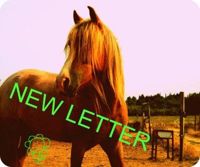 * New Letter .